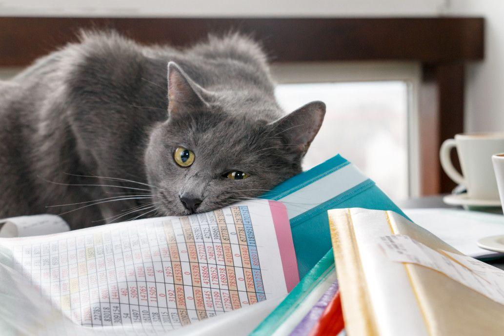 kot siedzi na papierach księgowych